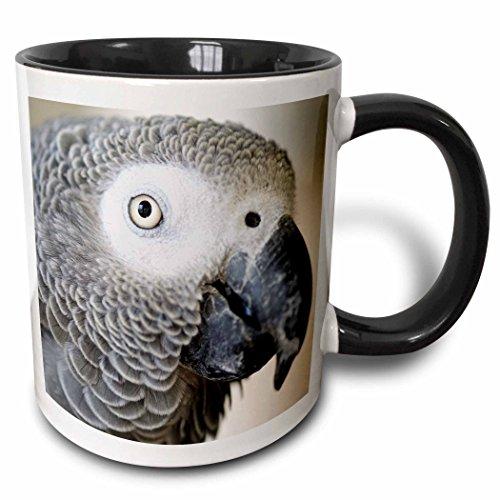 3dRose 140254_4 African Grey Parrot Tropical Bird-Na02 Mfr0001-Mfr Ceramic Mug, 11 oz, Black/White - Parrot Large Mug