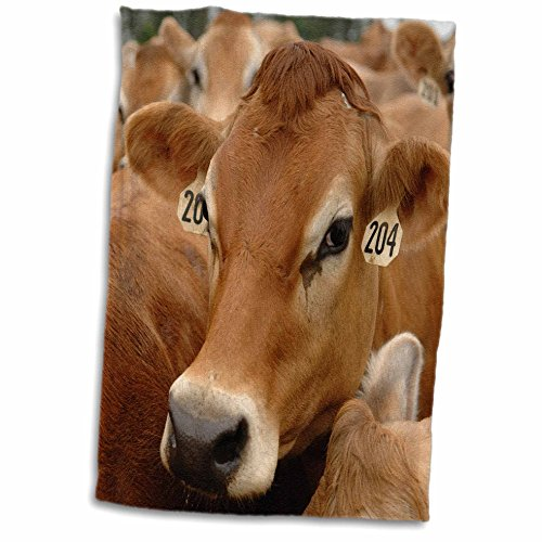 3dRose Jersey Dairy Cows, Rib Lake, Wisconsin-US50 KRS0004-Keith and Rebecca Snell Towel, 15