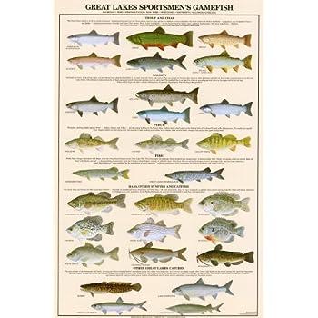 Amazon.com: Great Lakes Sportman's Game Fish Art Poster Print ...