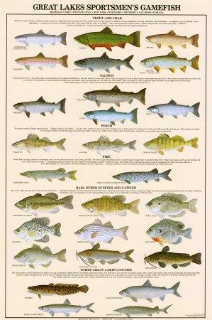 Great Lakes Sportmans Game Fish Art Poster Print 24x36