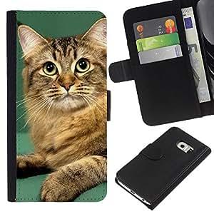 eJoy---La carpeta del tirón la caja de cuero de alta calidad de la PU Caso protector - Samsung Galaxy S6 EDGE - --Orange British Curl Bobtail Manx Cat