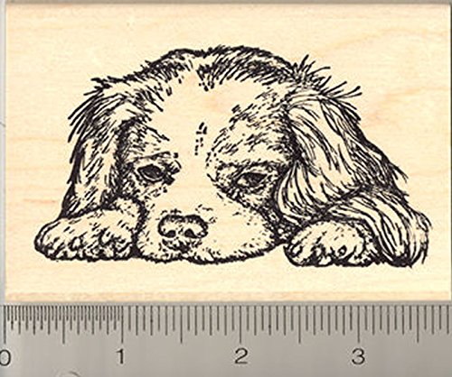 Cavalier King Charles Spaniel Rubber Stamp, Realistic Dog Art