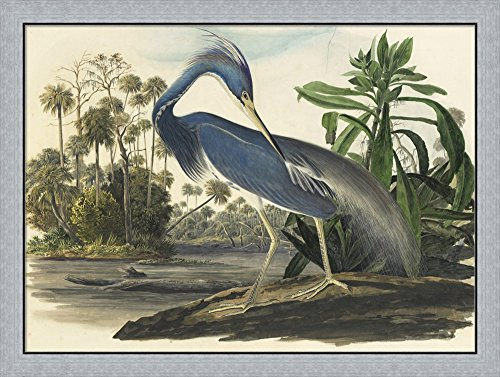 Blue Heron by Vintage Apple Collection Framed Art Print Wall Picture, Flat Silver Frame, 40 x 30 inches - Pictures Great Blue Herons