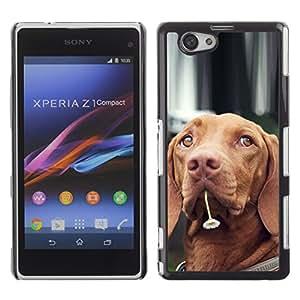 YiPhone /// Prima de resorte delgada de la cubierta del caso de Shell Armor - Vizsla Dog Breed Canine Flower Cute Pet - Sony Xperia Z1 Compact D5503