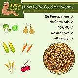 JARDTEC Non-GMO Dried Mealworms - 100% Natural