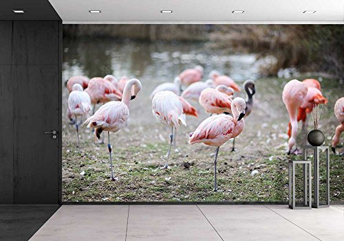 Pink Flamingo Birds in Zoo