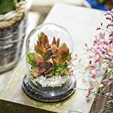 Round Clear Decorative Glass Terrarium Cloche Glass Dome Display Case with Air Hole for Miniature Succulents Storage