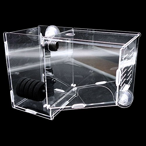 Dalle Craft Viviparous Fishes Acrylic Incubator Breeding Tank Hanging-in Aquarium Hatch Box with Bio-sponge Filter - Designed for Guppy , Betta ,Clown Fish, Dwarf Seahorse (Clown Fish Tank)