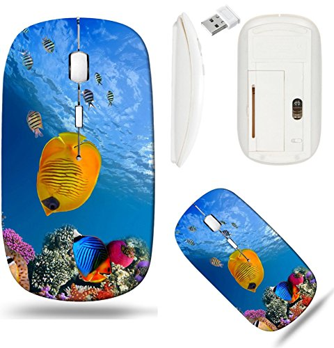 Liili Wireless Mouse White Base Travel 2.4G Wireless Mice with USB Receiver, Click with 1000 DPI for notebook, pc, laptop, computer, mac book IMAGE ID: 10397931 Masked butterfly fish Chaetodon semilar ()