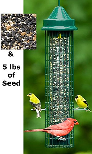 (Squirrel Buster Classic Bird Feeder with Divine Blend Seed)