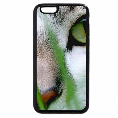 iPhone 6S / iPhone 6 Case (Black) Grey eyes cat