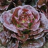 David's Garden Seeds Lettuce Romaine Cimarron SL2948 (Purple) 500 Non-GMO, Heirloom Seeds