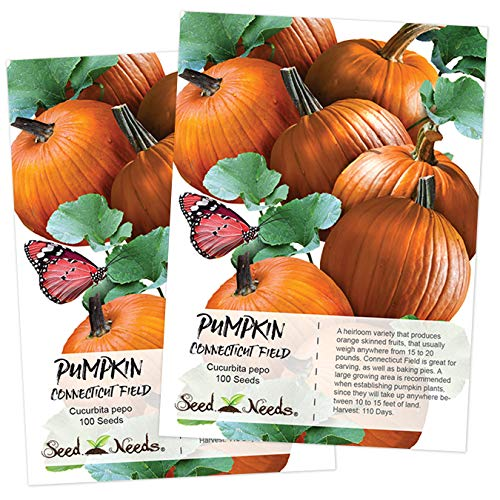 Seed Needs, Connecticut Fields Pumpkin (Cucurbita pepo) 2 Packages of 100 Seeds NON-GMO (Best Pumpkin Seeds To Plant)
