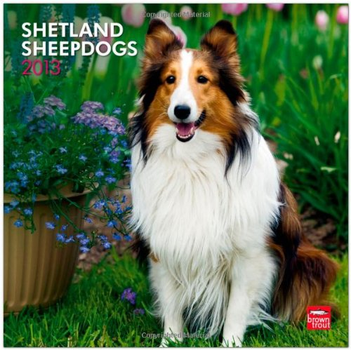Shetland Sheepdogs 2013 - Shelties - Original BrownTrout-Kalender
