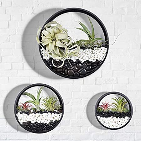 Round Hanging Wall Planters Metal Plant Containers Contemporary Morden Circle Iron Vase for Succulents or Herbs Small Black Perfect Wall Decor for Air Plants Faux Plants Cacti and More