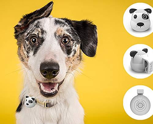 G.O.A.T. Bluetooth Pet Speaker - Spot Dog - Shark Tank Winner 2018! ()