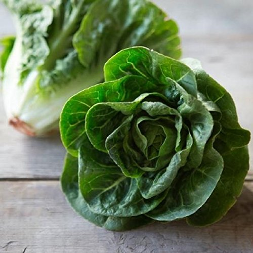 David's Garden Seeds Lettuce Little Gem SL2349 (Green) 500 Non-GMO, Heirloom ()