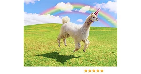 Amazon Alpaca Unicorn