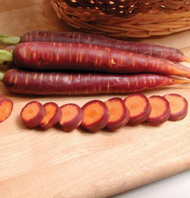David's Garden Seeds Pelleted Seeds Carrot Purple Haze D2680AP (Orange) 100 Hybrid Seeds
