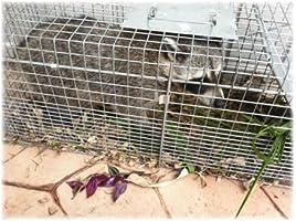 Havahart Trampa Jaula Plegable 1-Puerta para Grandes Animales ...