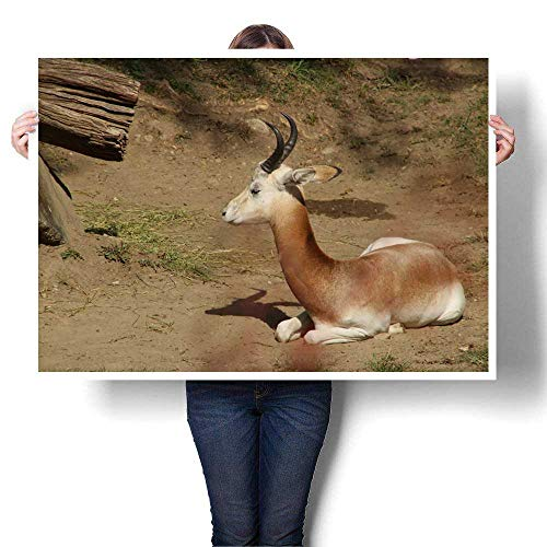 Anyangeight Canvas Prints Wall Art Resting Gazelle Decorative Fine Art Canvas Print Poster K 48