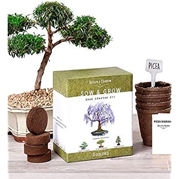 Amazon Com Planters Choice Bonsai Starter Kit The Complete Kit