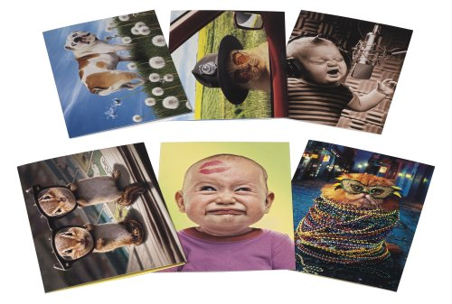 Avanti Birthday Card Collection, It's Your Birthday, 12-Count (200069)