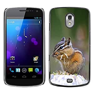 Exotic-Star Snap On Hard Protective Case For SAMSUNG Google NEXUS / I9250 ( Cute Chipmunk Squirrel )