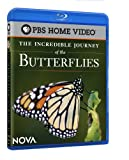 Incredible Journey of the Butt [Blu-ray]