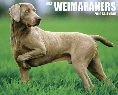 Just Weimaraners 2010 Calendar