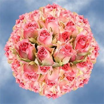 Amazon Globalrose 100 Fresh Cut Creamy Pink Roses Long Stem