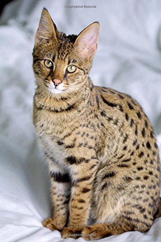 A Savannah Cat Animal Journal: 150 Page Lined Notebook/Diary pdf