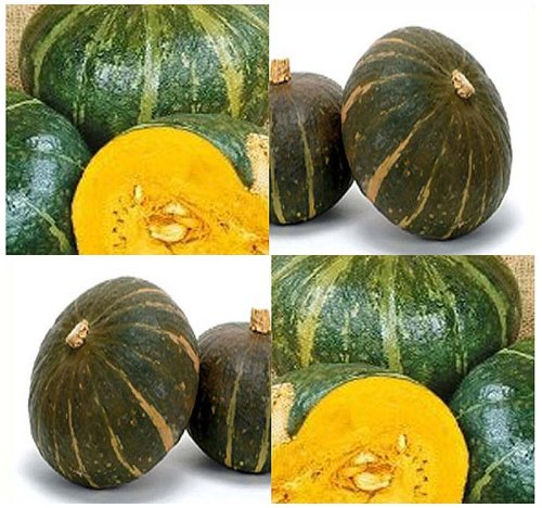 - 10 BURGESS BUTTERCUP Squash seeds BEST FLAVOR ~ 4-5 lbs size with a Turin shape.