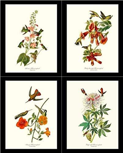 Amazon.com: Hummingbird Bird Wall Art Prints by James