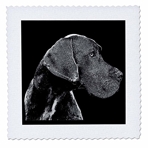 3dRose Sven Herkenrath Animal - A Cute Great Dane Dog on Black Background Trendy Side Profile - 18x18 inch quilt square (qs_280401_7) by 3dRose