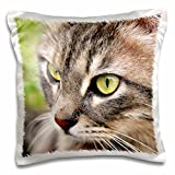 3dRose Long Haired Tabby Cat - Pillow Case, 16 by 16-inch (pc_16944_1)