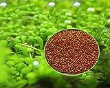 Aquarium Grass Plants Seeds,Aquatic Double Leaf