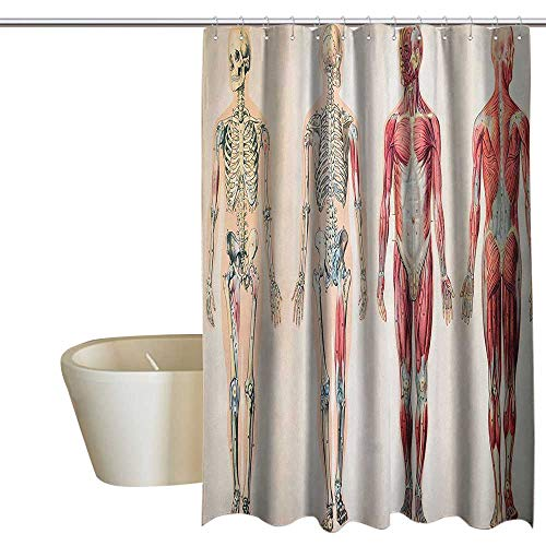 - Human Anatomy Home Decor Shower Curtain Vintage Chart of Body Front Back Skeleton and Muscle System Bone Mass Graphic Cool Shower Curtain W108 x L72 Ruby Cream
