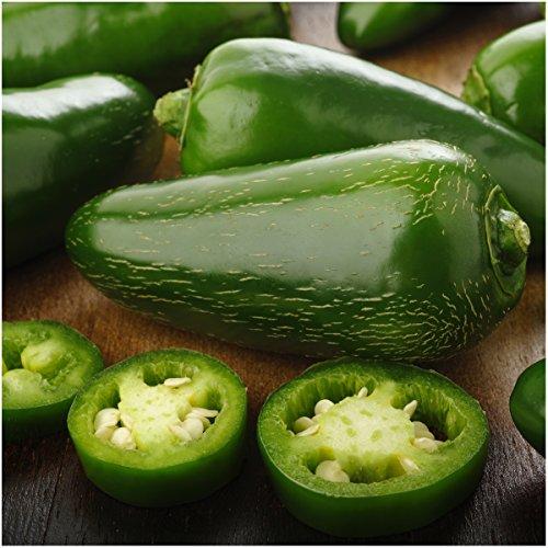 Package of 100 Seeds, Jalapeño M Hot Pepper (Capsicum