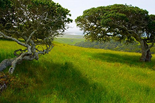 ARROYO LAGUNA OAKS VISTA SAN SIMEON HEARST CASTLE BIG SUR Photograph By Michael Verlangieri