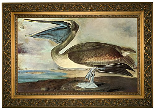 Audubon Brown Pelican Size - Ornate Gold Framed Canvas Print Reproduction 23 x 16 (1912 Print Framed Giclee)