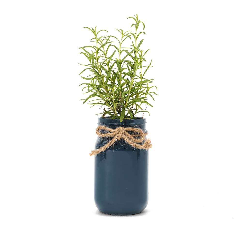 Thoughtfully Gifts, Mason Jar Garden, Grow Your Own Herbs Gift Set, Contains Rosemary, Basil and Sage Seeds with 6 Soil Pods by Thoughtfully (Image #3)