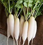 buy David's Garden Seeds Radish White Icicle UY1277 (White) 200 Organic Heirloom Seeds now, new 2019-2018 bestseller, review and Photo, best price $7.95