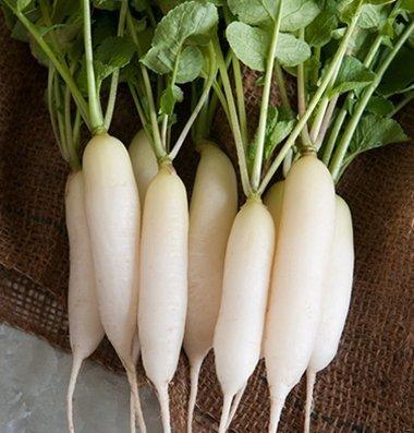 David's Garden Seeds Radish White Icicle SL1277 (White) 200 Non-GMO, Organic, Heirloom Seeds