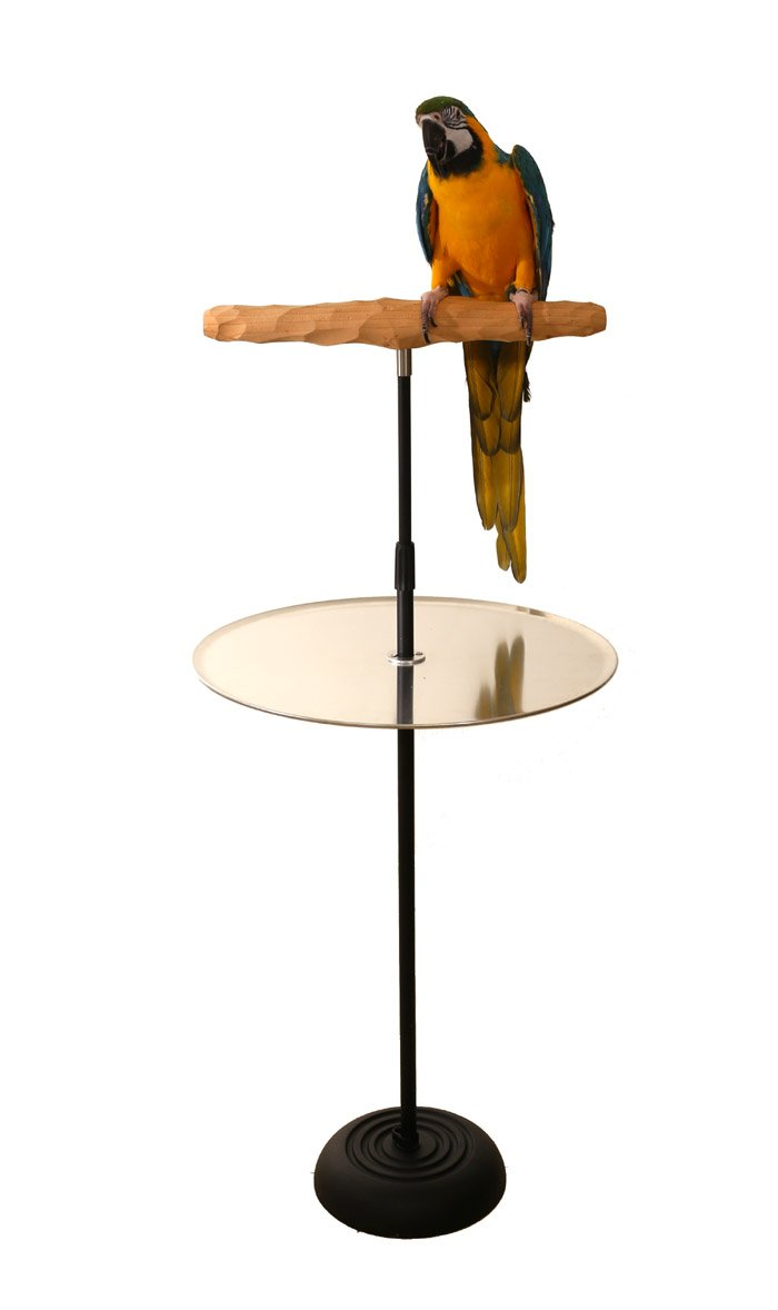 Parrot Training Perch Stand With Potty Tray (Large T Perch Hardwood) by Parrot Wizard