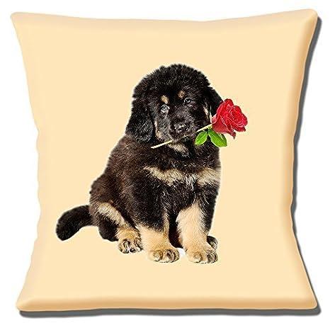 Lindo Pastor Alemán Cachorro Pelo Largo Rosa Roja Sobre ...