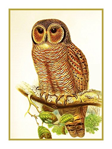 Orenco Originals Mottled Wood Owl by John Gould Birds Counted Cross Stitch Pattern