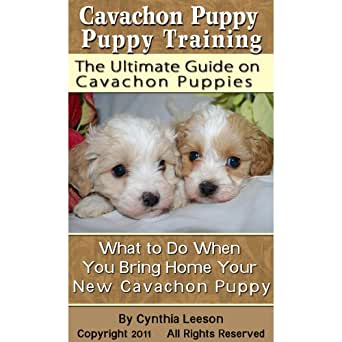 House training a cavachon puppy
