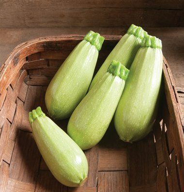 David's Garden Seeds Zucchini Magda D2913RV (Green) 25 Organic Heirloom Seeds