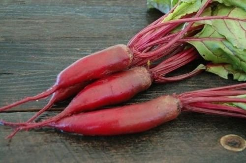 100 Cylindra Beet Seeds-Non GMO-Open Pollinated-Organic ()